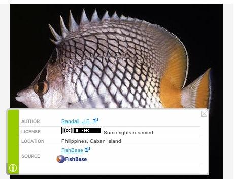 EOL fish photo CC marking