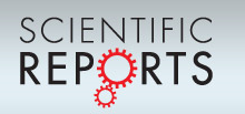 nature reports logo