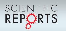 nature reports logo