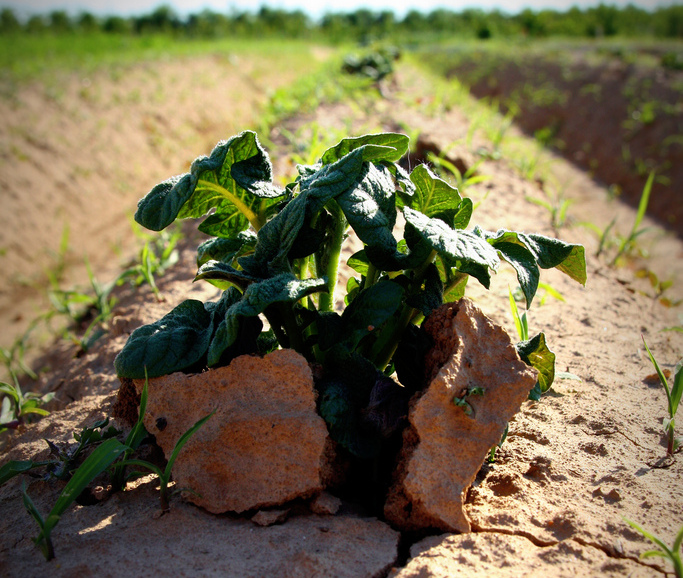 """""""Potato Power"""" (cropped), by Martin Fisch, CC BY-SA 2.0."""